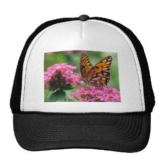 butterflies rounds social butterfly cap