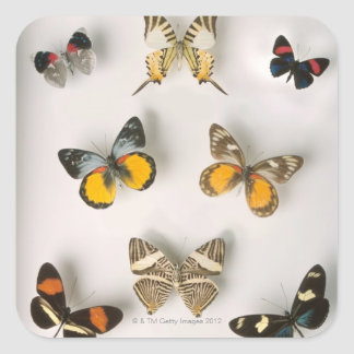 Butterflies scattered square sticker