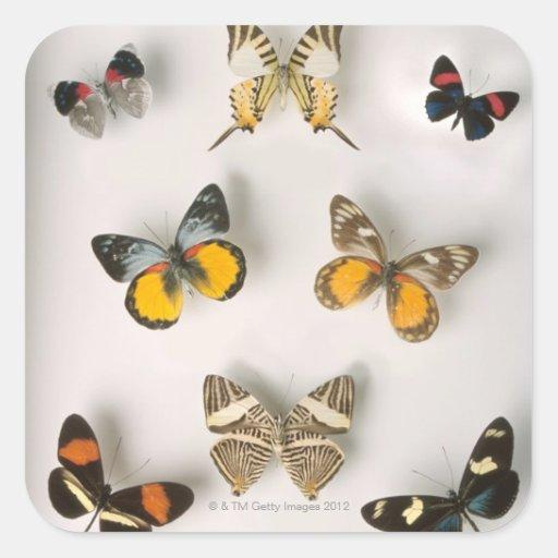 Butterflies scattered sticker