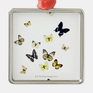 Butterflies shot on white Silver-Colored square decoration