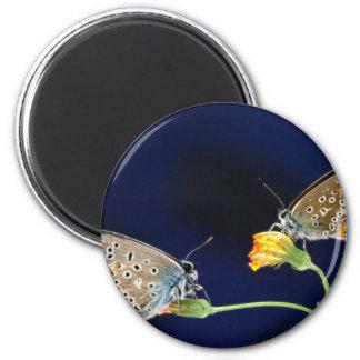 butterflies spring fling 6 cm round magnet