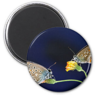butterflies spring fling fridge magnets