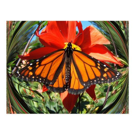 Butterfly 256 ~ postcard