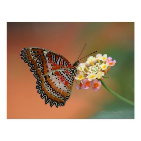 butterfly 2 postcard
