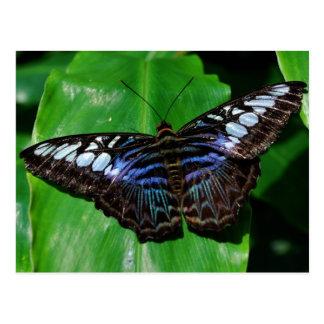 Butterfly 5 Postcard