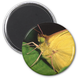 butterfly 6 cm round magnet