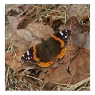 Butterfly, Acrylic Print. Acrylic Print