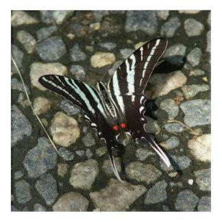 Butterfly, Acrylic Print. Acrylic Wall Art