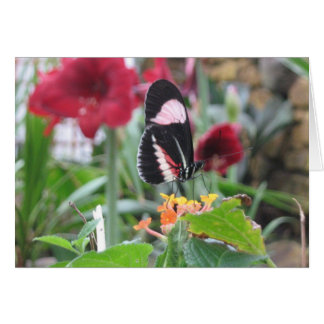 Butterfly and Amaryllis Card