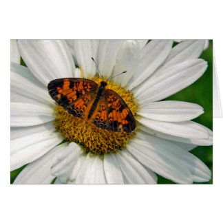 Butterfly and Daisy Note Card