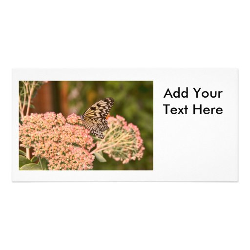 Butterfly and Flowers Photo Card