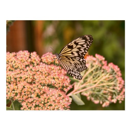 Butterfly and Flowers Postcard