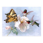 Butterfly and Hummingbirds Postcard