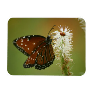 Butterfly and Ladybug Rectangular Photo Magnet