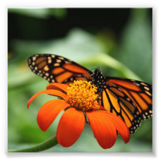 Butterfly and Orange Flower Photo Print