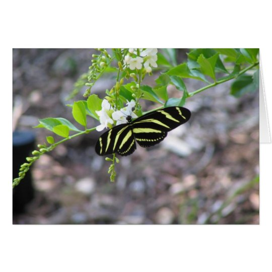 Butterfly at Rest Card