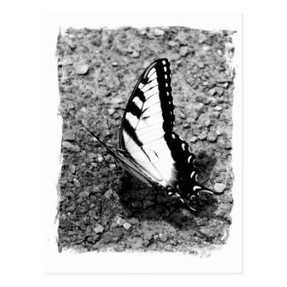 Butterfly Beauty - B&W Insect Close-Up Photo Postcard