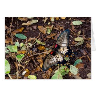 Butterfly Blank Note Card
