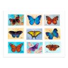 Butterfly Bonanza Postcard
