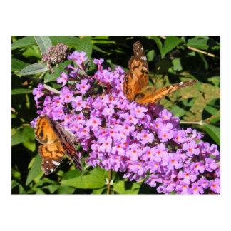 Butterfly Buddies ~ postcard