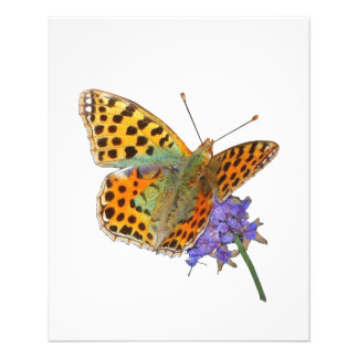 Butterfly - Butterfly (02) 11.5 Cm X 14 Cm Flyer