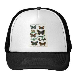 butterfly-clip-art-19 mesh hats