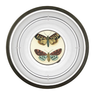 Butterfly Collection by Chariklia Zarris