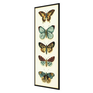 Butterfly Collection by Chariklia Zarris Canvas Print
