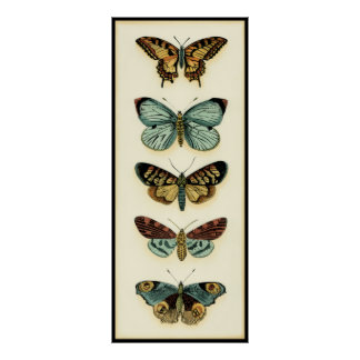 Butterfly Collection by Chariklia Zarris Poster