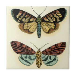 Butterfly Collection by Chariklia Zarris Tile