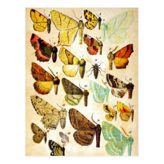 Butterfly Collection Postcard