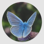 Butterfly Common Blue on thistle stickers