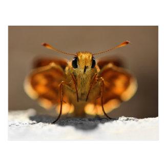 Butterfly Cute and Unique Mardon Skipper Postcard