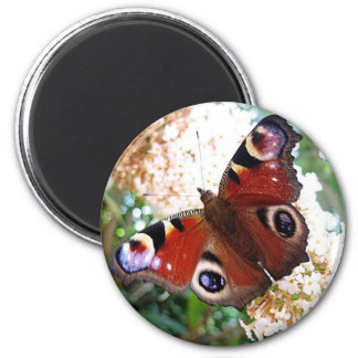 Butterfly day peacock eye 6 cm round magnet