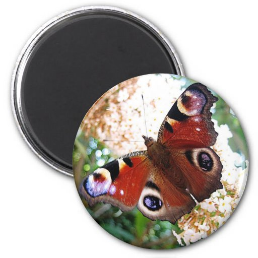 Butterfly day peacock eye magnets