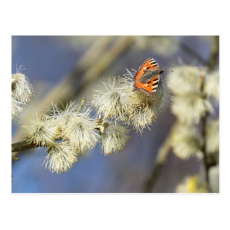 Butterfly drinking from a flower - Postcard