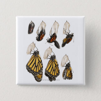 Butterfly emerging from coccoon 15 cm square badge