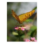 Butterfly feeding postcards