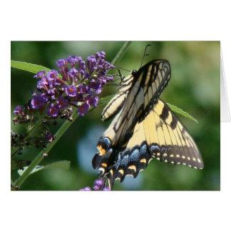 Butterfly Flower Card