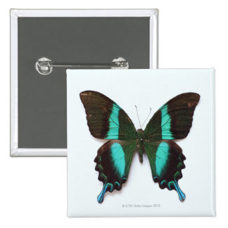 Butterfly found in regions of Asia and India 15 Cm Square Badge