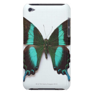 Butterfly found in regions of Asia and India Barely There iPod Cases