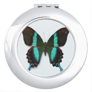 Butterfly found in regions of Asia and India Compact Mirror