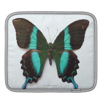 Butterfly found in regions of Asia and India iPad Sleeve