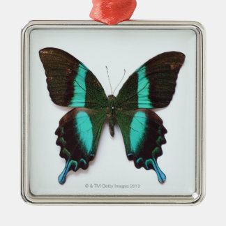 Butterfly found in regions of Asia and India Silver-Colored Square Decoration