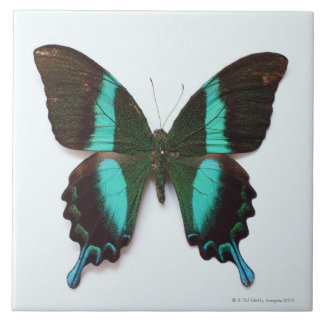 Butterfly found in regions of Asia and India Tile