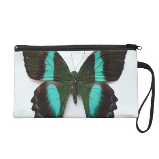 Butterfly found in regions of Asia and India Wristlet Clutch
