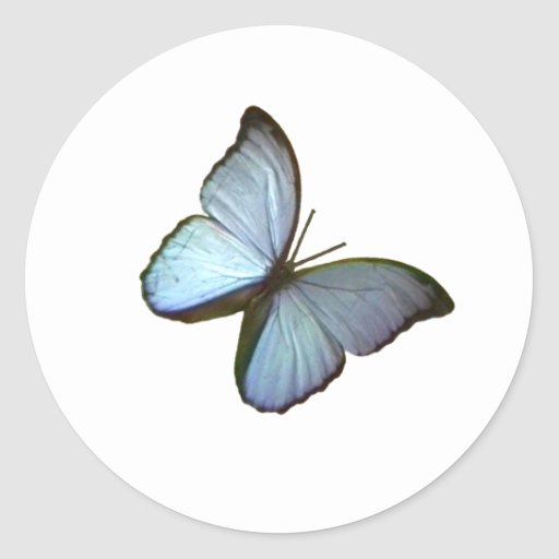 Butterfly Freiburg Germany Blue 45 deg The MUSEUM Stickers