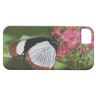 Butterfly from Africa iPhone 5 Cases