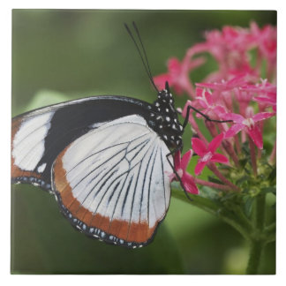 Butterfly from Africa Tile