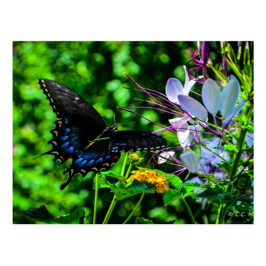 Butterfly Garden Moment Postcard